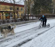 Sovičky-jízda psím spřežením