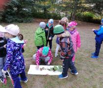 Sovičky- tvoříme knihu stromů